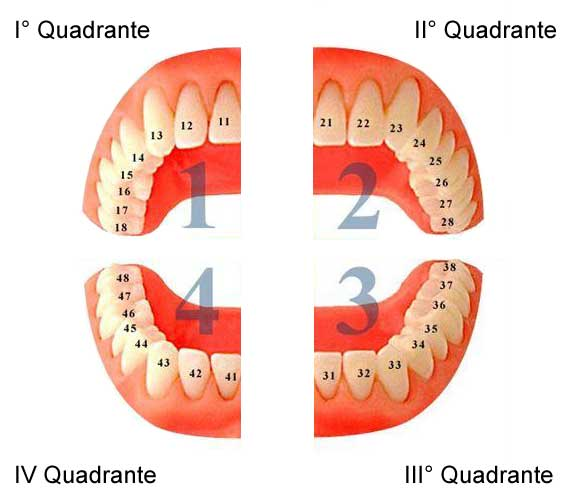 levigatura radicolare per quadranti l'immagine mostra la bocca del paziente divisa in quattro quadranti